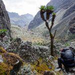 David Neacşu şi Asociaţia Oxigen au cartografiat un nou traseu de escaladare al celui de-al treilea varf african David Neacşu şi Asociaţia Oxigen au cartografiat un nou traseu de escaladare al celui de-al treilea varf african REV 4296 150x150