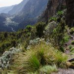 David Neacşu şi Asociaţia Oxigen au cartografiat un nou traseu de escaladare al celui de-al treilea varf african David Neacşu şi Asociaţia Oxigen au cartografiat un nou traseu de escaladare al celui de-al treilea varf african REV 4471 150x150