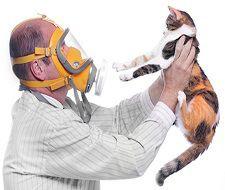 De ce devenim alergici? De ce devenim alergici? alergie la pisici
