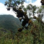 uganda (february 2015) Uganda (February 2015) DSCN7439 150x150