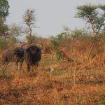 uganda (february 2015) Uganda (February 2015) DSCN7900 150x150