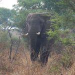 uganda (february 2015) Uganda (February 2015) DSCN7999 150x150