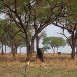 uganda (february 2015) Uganda (February 2015) DSCN8011 150x150