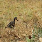 uganda (february 2015) Uganda (February 2015) DSCN8014 150x150