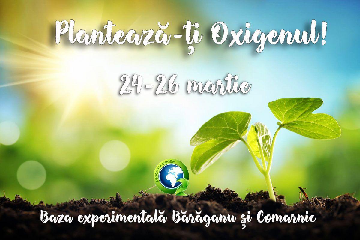 Plantare 24-26 martie