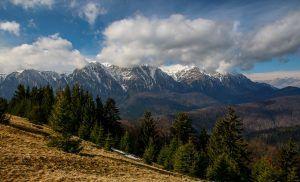 99 Importanța împăduririlor și necesitatea lor în România Importanța împăduririlor și necesitatea lor în România 99 300x182